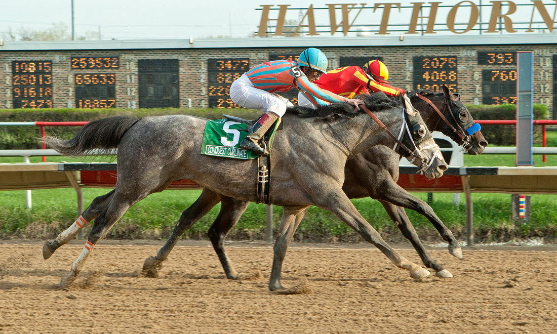 Ontario Stallion Conquest Curlinate in Illinois Derby