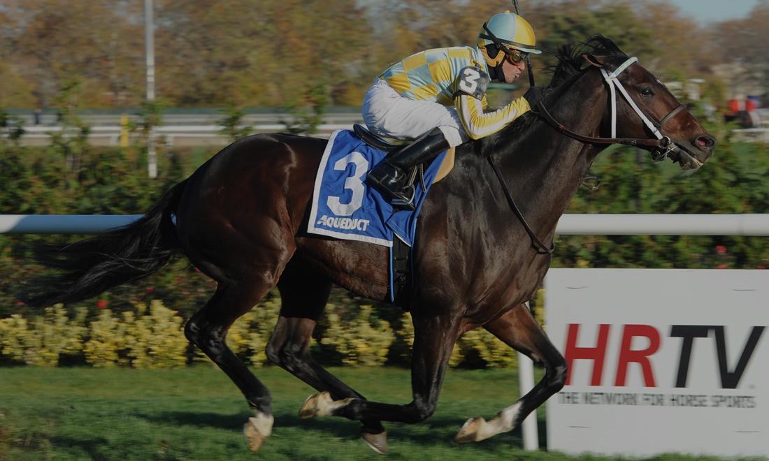 Ontario stallion Dynami Sky
