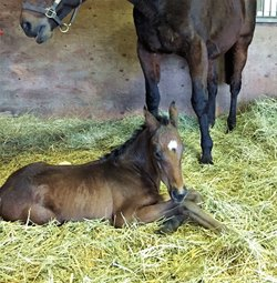 CCfirst foal