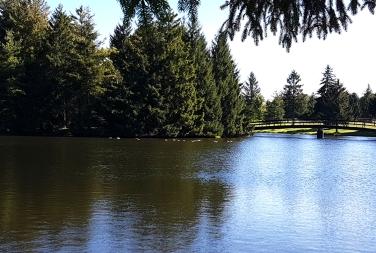 Pond at Shannondoe Farm