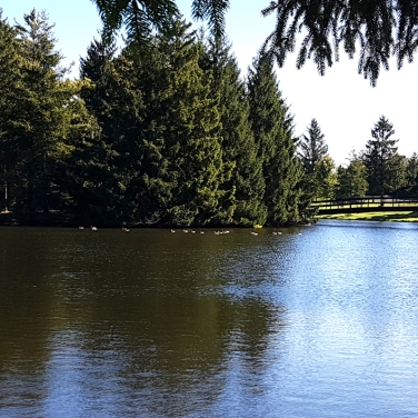 Pond at Shannondoe Farm