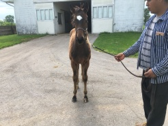 Terri's Pass 2020 Foal